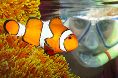 The scuba diver looking up to a Clown fish. Stock Photo