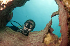 Scuba diver looks at coral. Diver looks through a barrel sponge Stock Photography