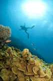 Scuba diver makes a hover. In ocean with colorfull coral stock photo