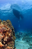 Scuba Diver next to a Coral Wall Royalty Free Stock Photography