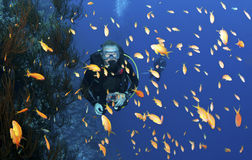 Scuba diver with orange fish Stock Photo
