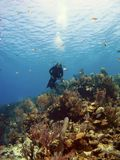 Scuba Diver over a Cayman Island Reef Stock Image