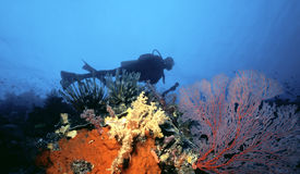 Scuba Diver over South Pacific reef Royalty Free Stock Images