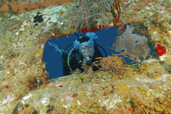 Scuba Diver Peering out From Opening in Shipwreck - Roatan Stock Images