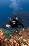 Scuba Diver Photographing the Coral Stock Photography