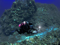 Scuba Diver Photographing A Hawaiian Reef Stock Images