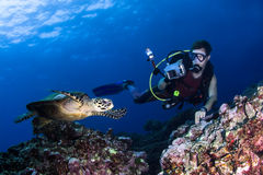 Scuba diver photographing a swimming turtle stock image
