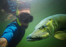 Scuba diver and pike. Royalty Free Stock Photo
