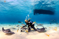 SCUBA Diver playing with Stingrays Stock Photos