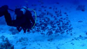 Scuba Diver at Red See stock footage