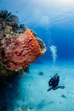 SCUBA diver on a reef Stock Photo