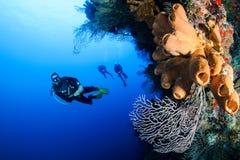 SCUBA diver on a reef Royalty Free Stock Photos