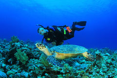 Scuba Diver and Sea Turtle Stock Photo