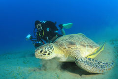 Scuba Diver and Sea Turtle Royalty Free Stock Photo