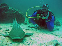 Scuba diver and shark, Thailand. Diver obseving relaxing shark in Andaman sea Royalty Free Stock Photo