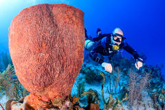 SCUBA Diver in sidemount on a reef. SCUBA diver in a technical sidemount cofiguration next to a huge sponge royalty free stock image