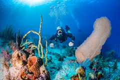 SCUBA Diver in sidemount on a reef Royalty Free Stock Images