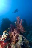 Scuba diver silhouette Royalty Free Stock Photos