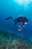 Scuba diver with speargun and dead fishes Stock Photography