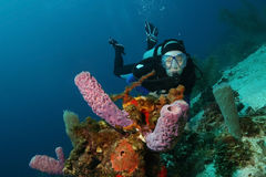 Scuba Diver and Sponges - Roatan Royalty Free Stock Photos