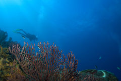 Scuba diver in St. Lucia Stock Image