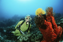 Scuba Diver Swimming By Coral Reef And Feather Star Royalty Free Stock Photos