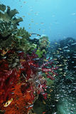 Scuba Diver Swimming By Coral Reef Stock Photos