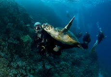 Scuba diver swims with green turtle
