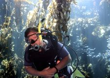 Scuba Diver Swims Through Kelp Forest off California Coast Royalty Free Stock Images