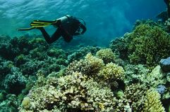 Scuba diver swims over reef Royalty Free Stock Photography