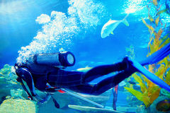 Scuba diver swims underwater among reefs. Scuba diver swims underwater among coral reefs Royalty Free Stock Images