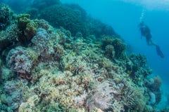 Scuba diver take photo. Corolful coral Stock Image