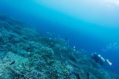Scuba diver take photo Royalty Free Stock Photography