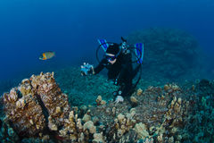 Scuba Diver taking a shot of the Reef Royalty Free Stock Photos