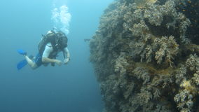 Scuba diver touching coral reefs underwater. A full shot of a scuba diver looking at the corals stock video