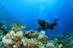 Scuba Diver and Tropical Fish Stock Photos
