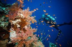 Scuba Diver, Tropical Fish and Coral Reef Stock Images