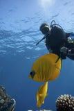 Scuba Diver in tropical sea stock photography