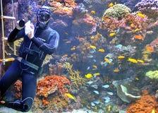 Scuba diver. Under water cleaning the aquarium stock images