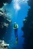 Scuba Diver Underwater. A pretty female scuba diver swimming between two coral cliffs, underwater Royalty Free Stock Image