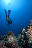 Scuba Diver underwater with antiqueancient amphora royalty free stock photos