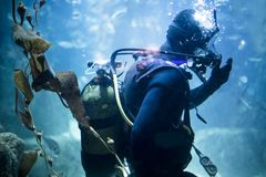 Scuba diver at underwater Royalty Free Stock Photos