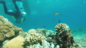 Scuba Diver underwater. Male scuba diver swimming underwater.Scuba Diver in tropical sea.tropical underwater world.Diving and snorkeling in the tropical sea stock video footage