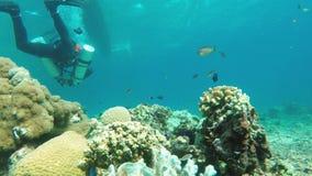 Scuba Diver underwater stock video