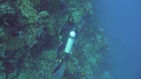 Scuba Diver underwater. Scuba diver explores underwater coral reef and watching the fish.Scuba diver underwater in a tropical sea.Tropical fish on a coral reef stock video