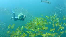 Underwater diver and fish shoal at Brazil