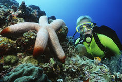 Scuba Diver Watching Large Starfish royalty free stock photo