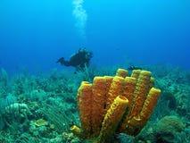 Scuba Diver and Yellow Tube Sponge Royalty Free Stock Photos