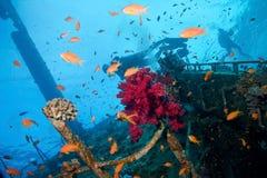 Scuba Divers Stock Image