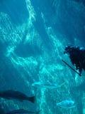 Scuba divers Stock Photos